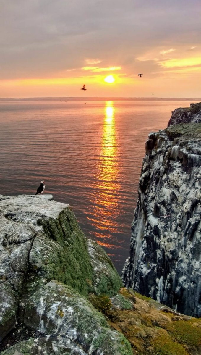 Flicking through my images & found this shot from the #IsleOfMay in 2018  🤞we can get out to some #seabird #islands this summer!  #ornithology #puffin #sunset #nature  @KSBScotland