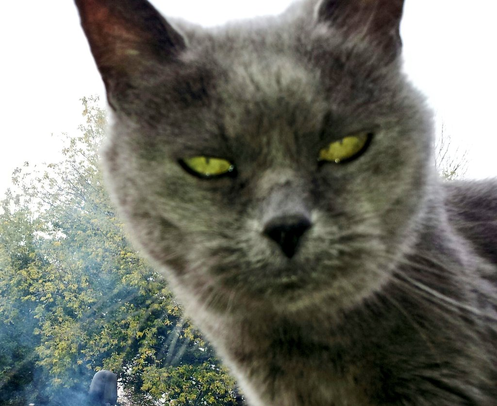 #catsjudgingmarjorie @mtgreenee doesn't like to be questioned by people with mean questions, she is weak and a coward.