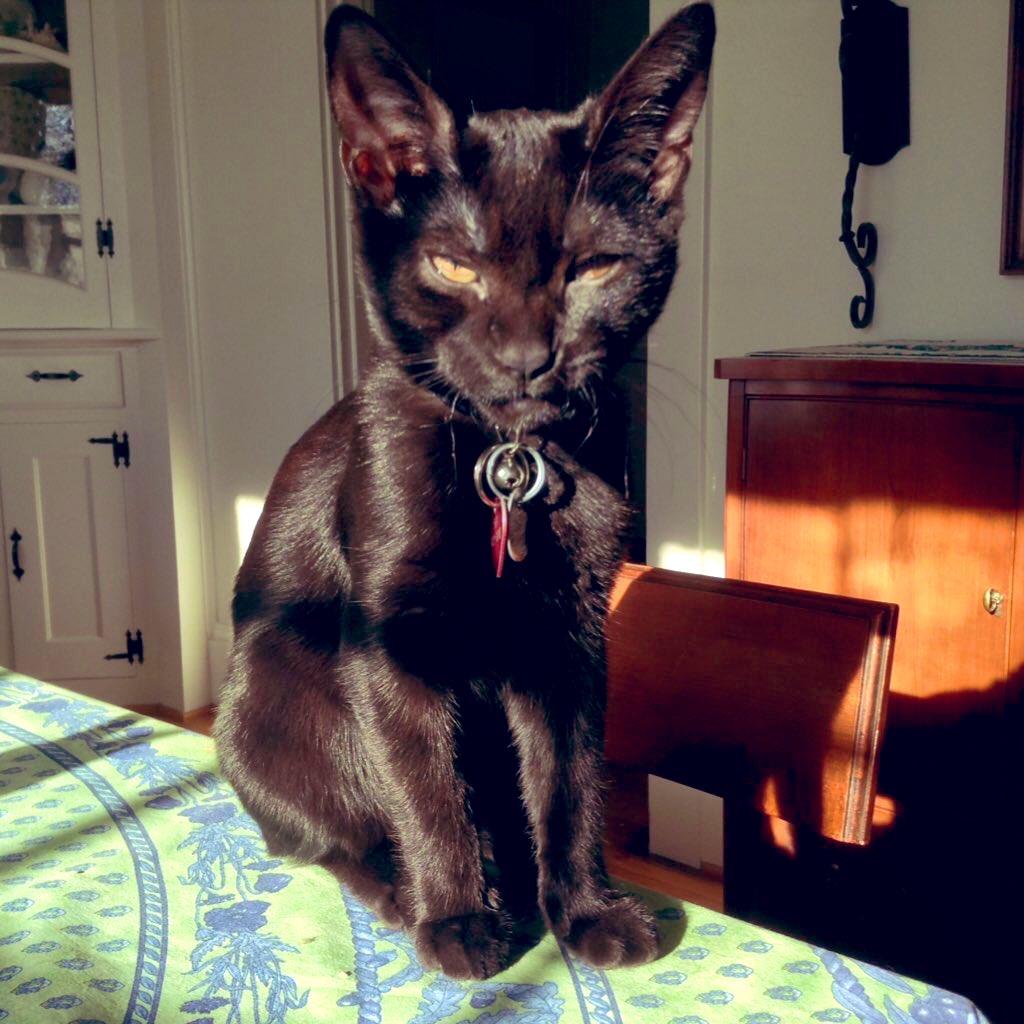 @astrocats4 JiJi is NOT amused.  #catsjudgingmarjorie