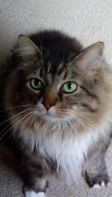 I wonder if Marjorie Taylor Greene knows QAnon is an acronym for Questioning Anonymous Nubbin On Nubbin   #catsjudgingmarjorie