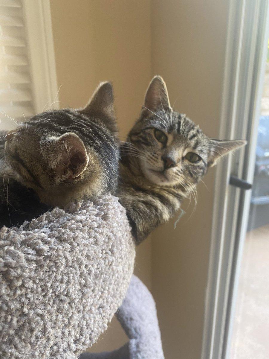 #catsjudgingmarjorie
