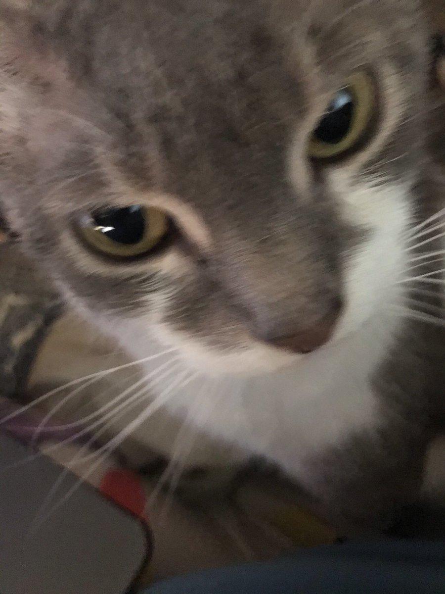 Nermal is appalled  #catsjudgingmarjorie