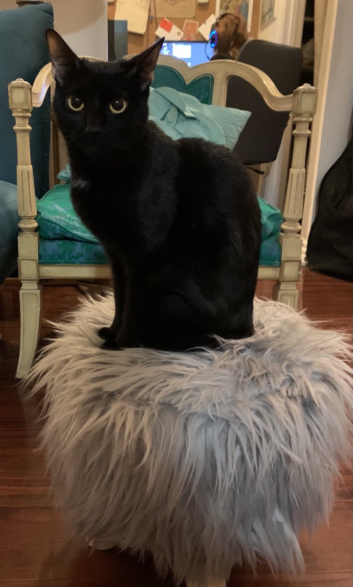 Midnight judging Marjorie #catsjudgingmarjorie