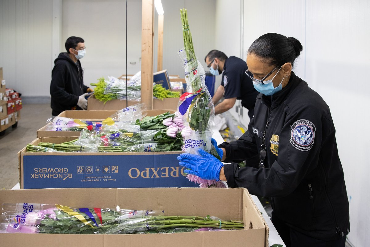 Valentine's Day is almost here and CBP agriculture specialists are working hard to make sure the imported cut flowers you buy for your sweetheart are pest and disease free.  Learn more ➡️