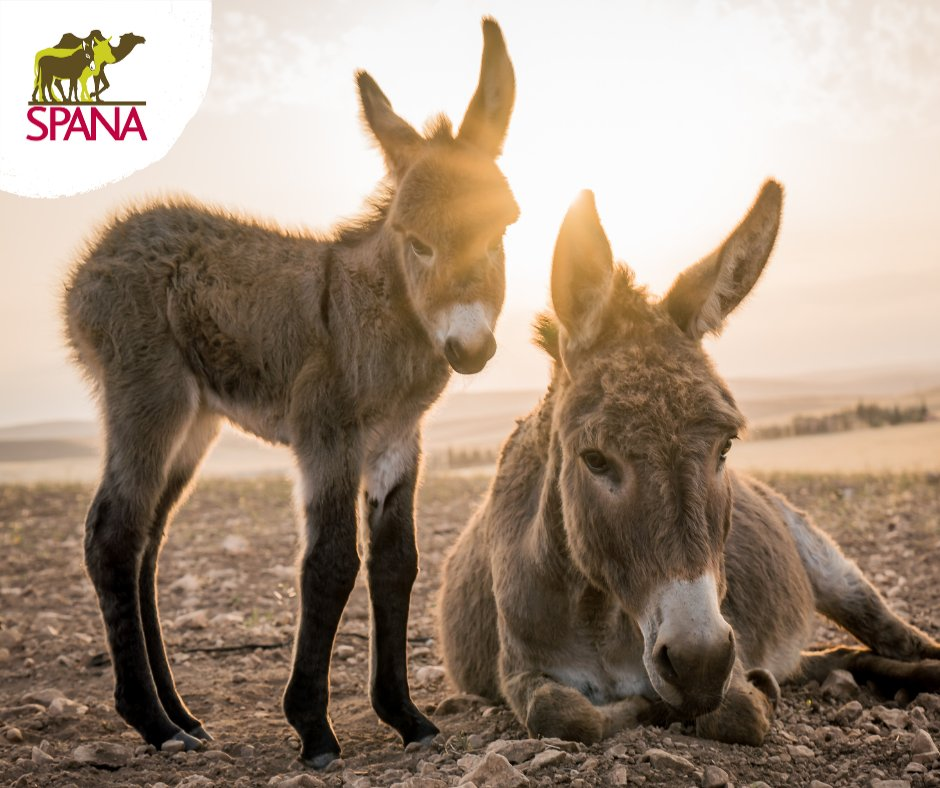 SPANA is hosting a free online Tea & Tales event on Thursday 25 February (2.00pm – 3.00pm), and we'd love you to join us. At the event, you'll hear the latest news & updates from members of the SPANA team, including details of how we are currently helping working animals.