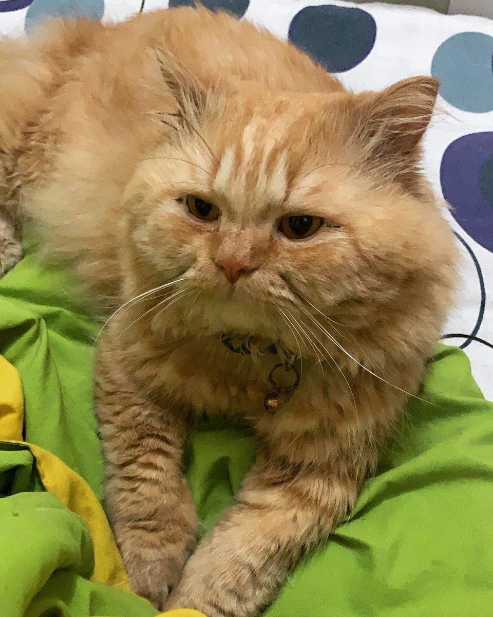 Ari boy💕 #catsofinstagram #cats #CatsOnTwitter #CatSweat #catstagram #CatsMovie #catshuis #catshuisoverleg #catsjudgingkellyanne #catsjudgingmarjorie #catslife #catsnoirfriday