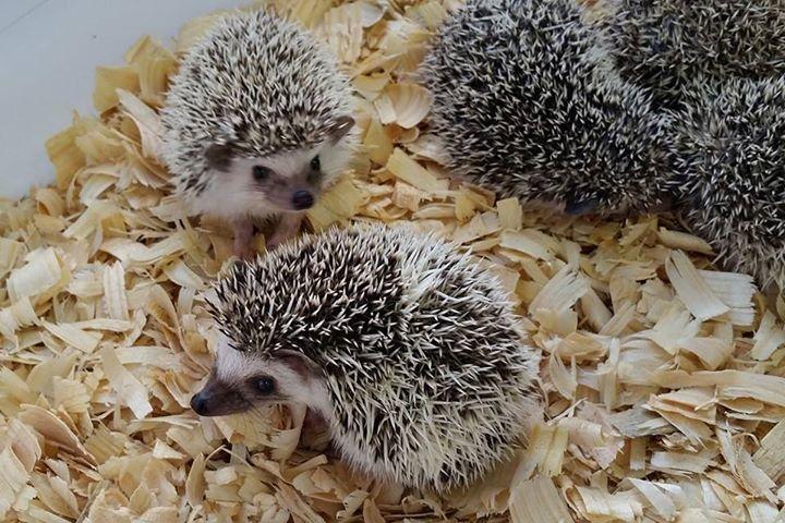 Janda Exotics Animal Ranch Jandaexotics Twitter