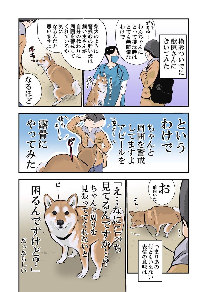犬がトイレの時飼い主さんの目をじっと見つめる理由