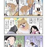 実はこんな意味があった?!犬がトイレをするときに飼い主の顔をじっと見つめるあの行動!