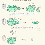 多肉植物はいろんな増え方がある!たくさん育てたいときはこの方法!