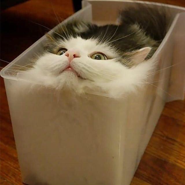 帰ってきたら猫が液体になってた