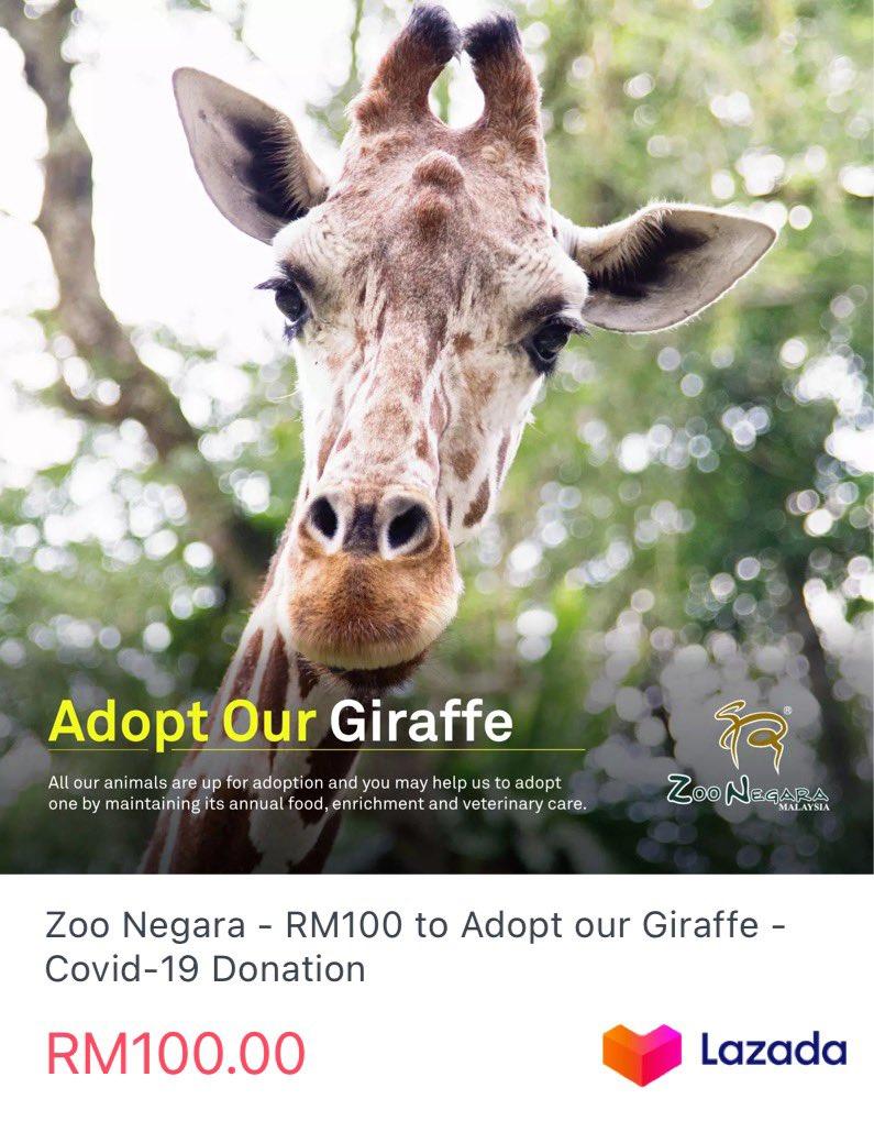 Sebenarnya selain drpd pusat perubatan, Zoo Negara juga masih memerlukan dana bantuan utk bekalan mknan tahunan dan penjagaan veterinar yg rapi utk haiwan² di dlm jagaan mereka.   Kepada sesiapa yg ingin menyumbang, boleh terus ke aplikasi Lazada.  👉🏼 https://t.co/LLBB4xsiZB https://t.co/16bAuch6BY