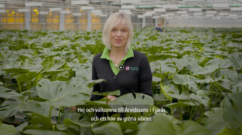 Välkomna till ett hav av gröna växter! https://t.co/0Wm3iwtdR3 https://t.co/HPNv4hCacu