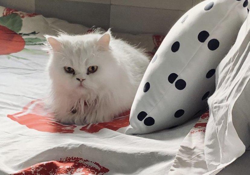 Juno baby💕 #cats #CatsOfTwitter #catsofinstagram #CatsOnTwitter #CatSweat #CatsOfTheQuarantine #catscratchestwt #CatSquad #catscountdown #catshuis #catshuisoverleg #catsjudgingkellyanne #catsnoirfriday