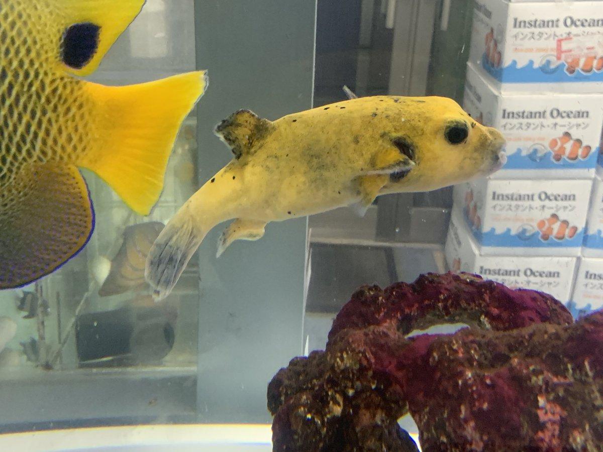魚 ベッセル 海水