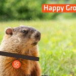 Image for the Tweet beginning: Happy Groundhog Day to everyone