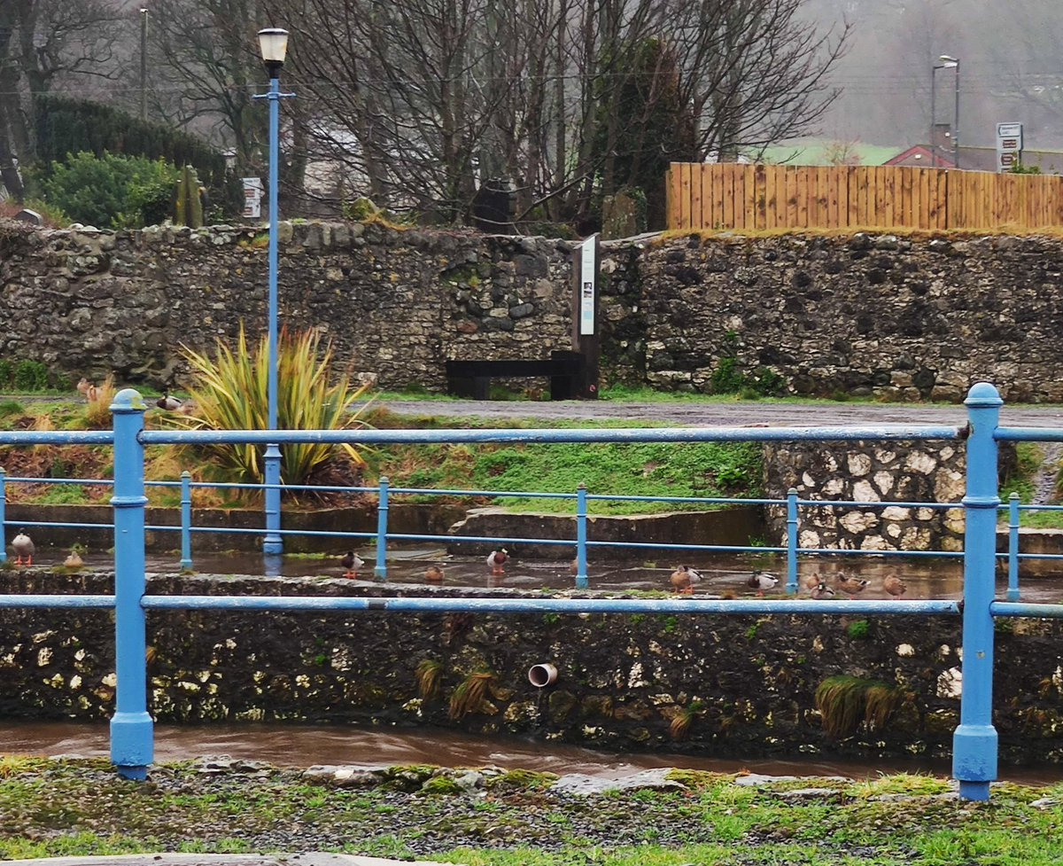 Too wet and rough at Glenarm for the ducks. They all lined up but stayed out of the water. Zoom in to see 🦆🦆🦆 @LoveBallymena  @newslineweather #ducks #weather #flooding #WetFebruary