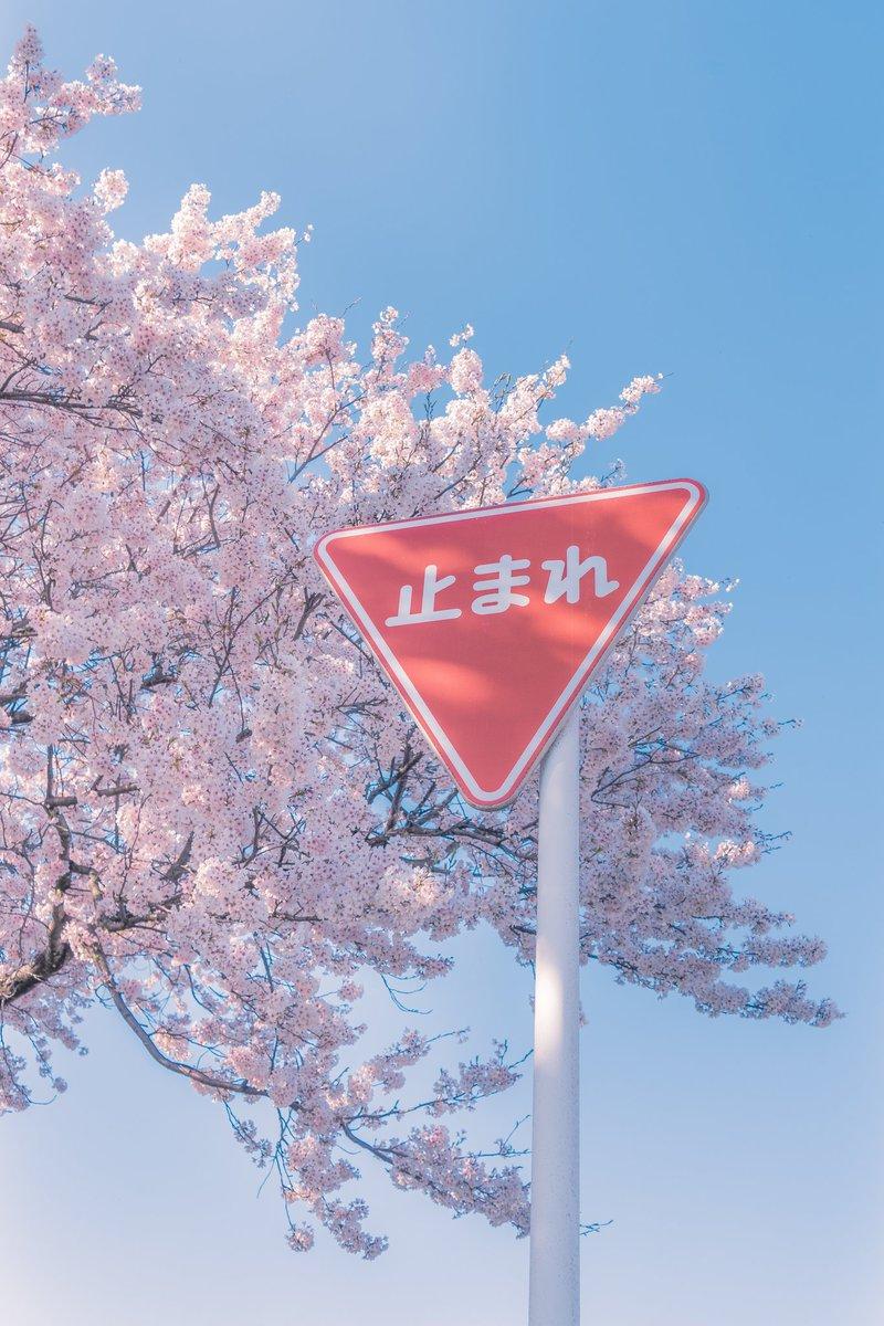暦の上では春が来た。