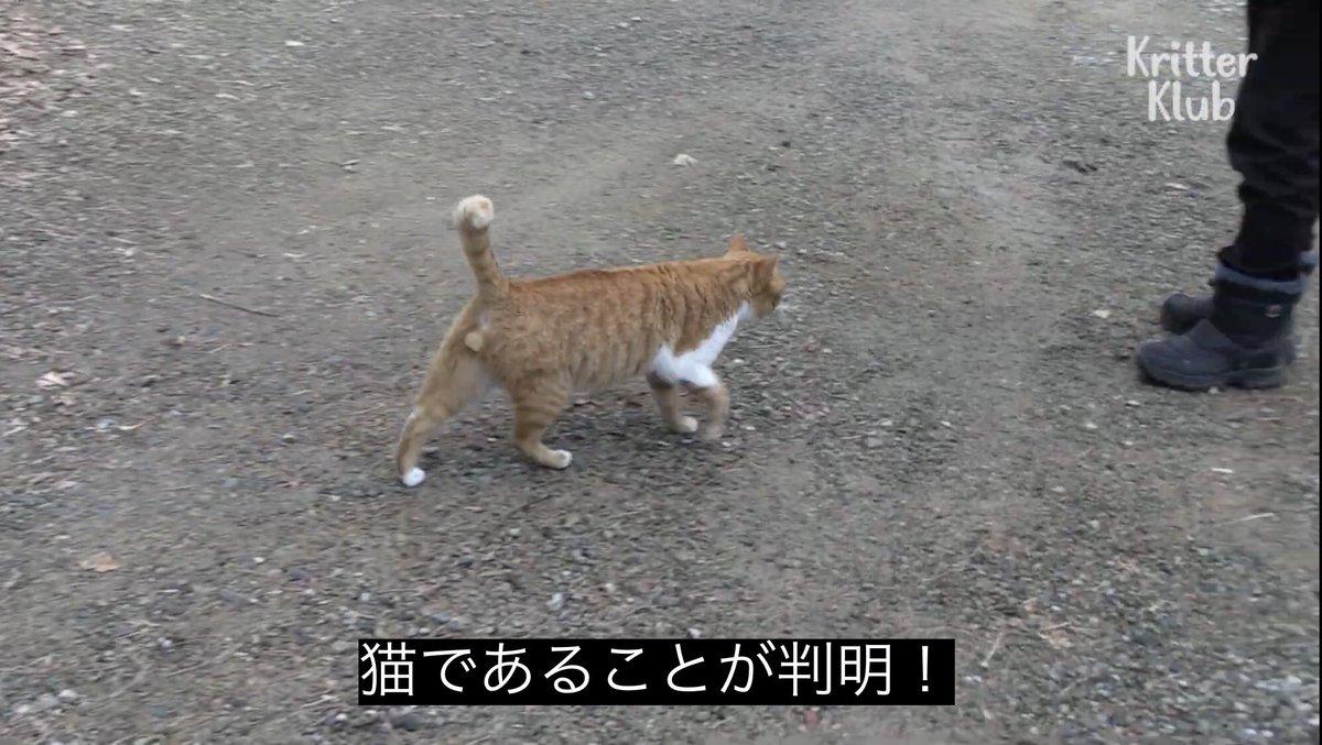 猫であることが判明!