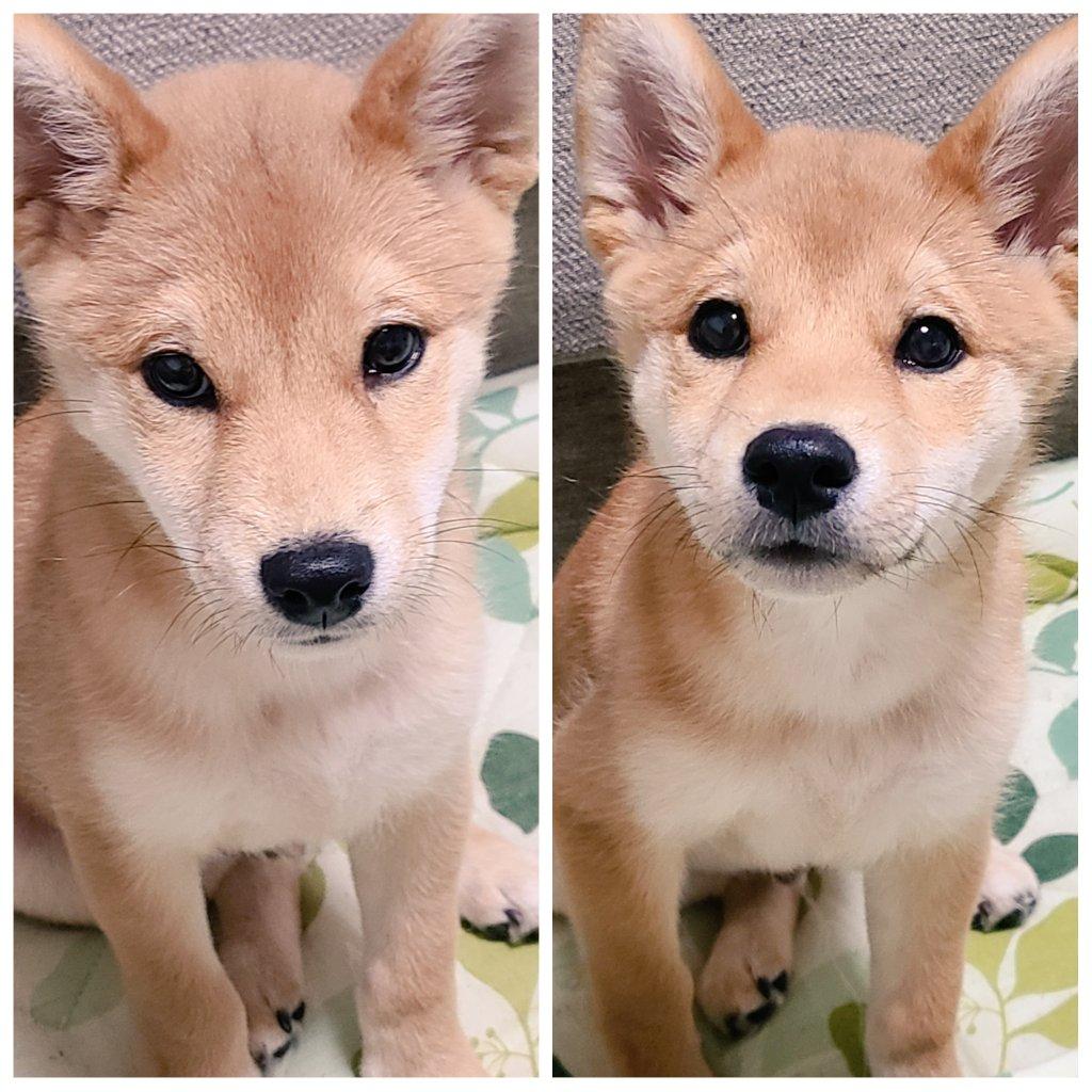 ←飼い主がスマホいじってる時の犬→飼い主がおもちゃを持った時の犬