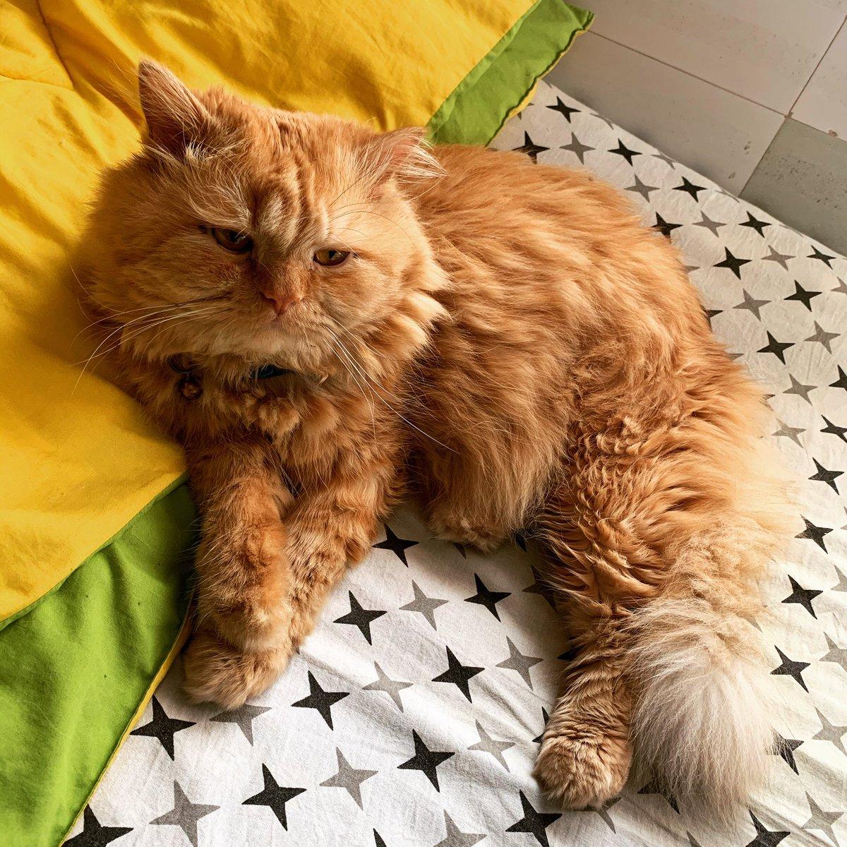 Ari boy 💕 #cats #catsjudgingmarjorie #CatsOfTwitter #cats #catsofinstagram #CatsCountdown #cats_of_instagram #catshuis #catshuisoverleg #catsjudgingkellyanne #catsnoirfriday #CatsOfTheQuarantine