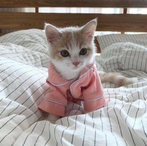 寒い時はお布団に限るニャ