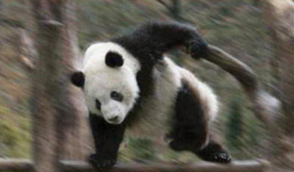 宍戸さんとパンダでハート型できるが