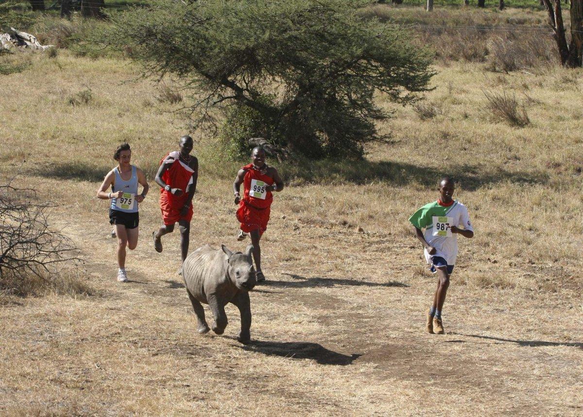 いまなら出てみたい🏃♂️ #lewamarathonまたケニア行きたいな〜🇰🇪ケニアのマラソン大会の写真おもしろ。『ずっと見てられるな 』『何やっても合成に見える』 - Togetter