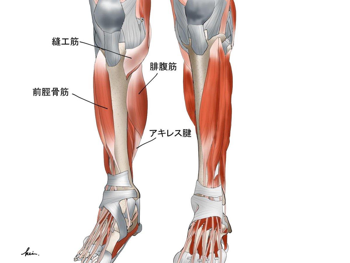 下腿前面筋群の理学療法|ePT @ePT59411176 #note … 解剖図はkeiさんからの提供です。詳細は下記へ👇]#kei#FreePTsalon
