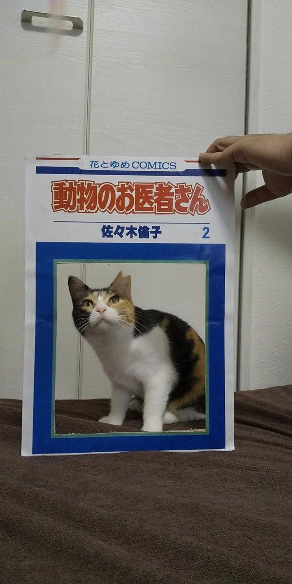 コスプレからの破壊#猫好きさんと繫がりたい