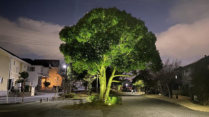 これはいいブロッコリーですね巨大なブロッコリーにしか見えない街路樹が話題に 「想像以上にブロッコリー」「マヨネーズつけて食べたい」 @itm_nlab
