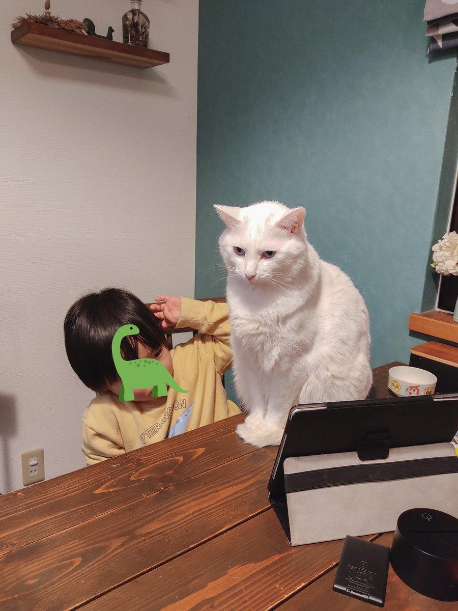 猫に邪魔され慣れてる息子は、iPad観る視界が半分になっても気にしない