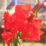 daiskilandのサムネイル画像