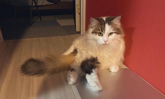 か 怪しい な 猫 どうか も