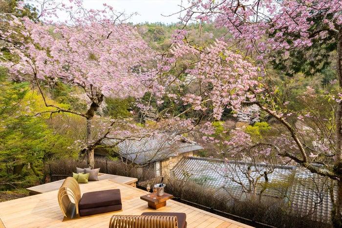 星のや京都に1日1組限定「さくらテラス」桜の下で春の風情と食を味わう#京都 #旅行▼写真・記事詳細はこちら