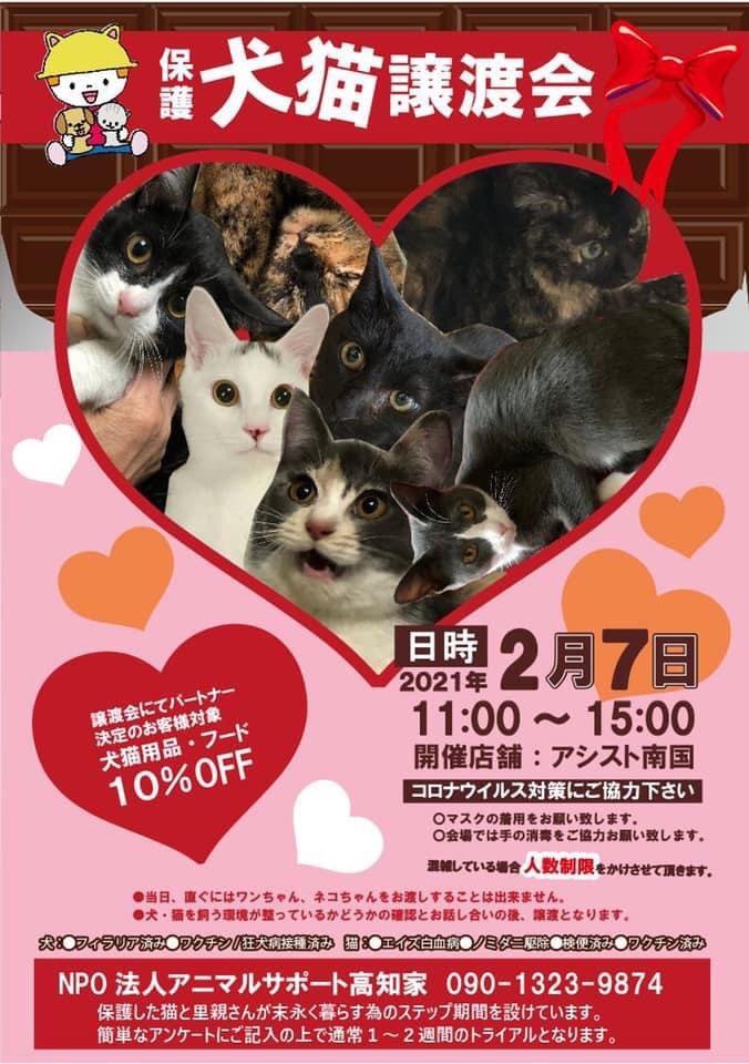 アニマル サポート 高知 家 高知市で多頭飼育崩壊から犬22匹救出 愛護団体が12/1譲渡会|高知新聞