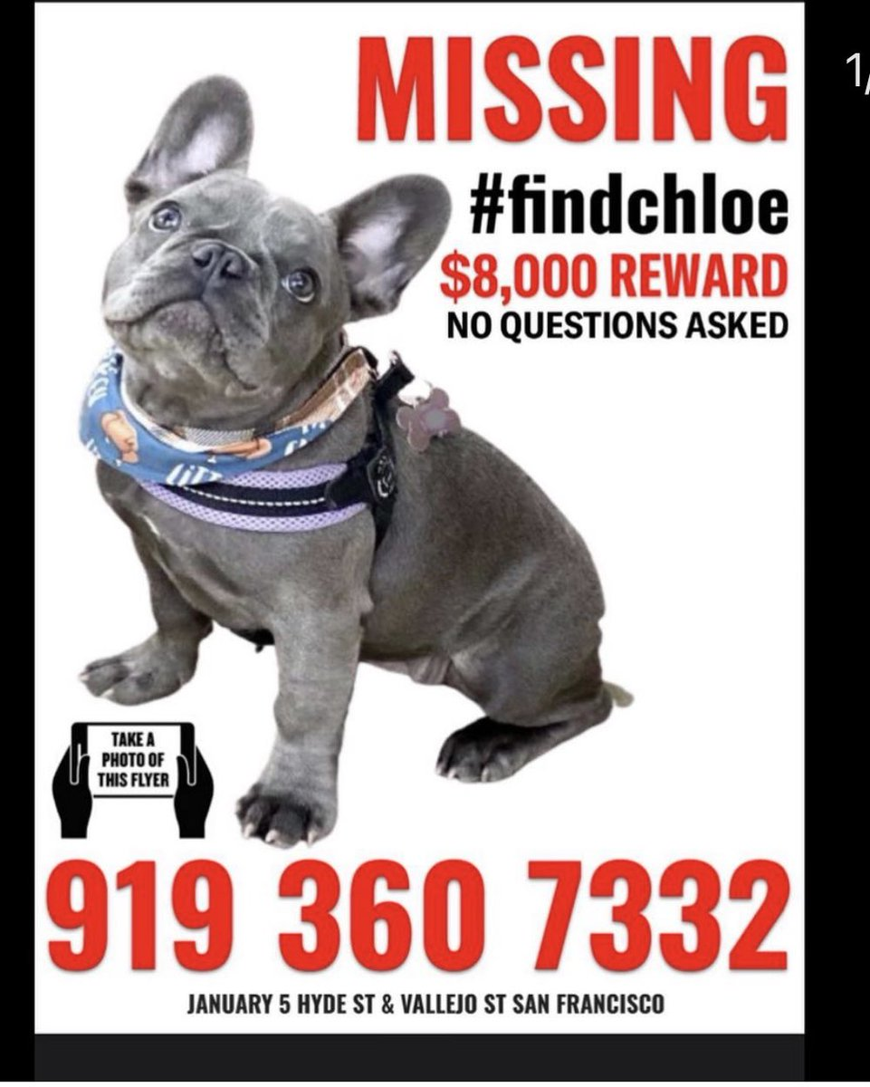 On January 5th Sarah was robbed and beaten at gunpoint & #Chloe was taken in the San Francisco area ..SFPD has video and has released photos of the car.. 8K reward is being offered , no questions asked. They have no real leads and it's been a month. Please RT #FindChloe
