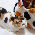 愛猫とおそろいの柄が素敵!一目惚れしたバッグ!