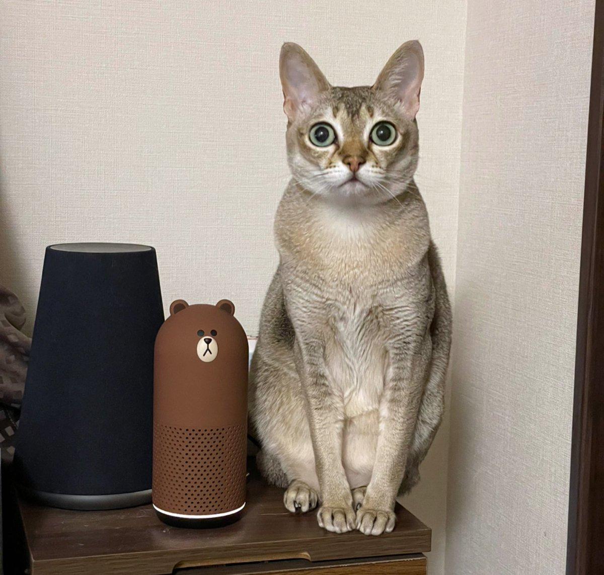 左から、LINE CLOVA WAVE、friends、、、新しい猫型スマスピかな。ねこIoTLTでたくさんの猫さま愛をご覧ください♡お申し込みが60名いきましたー!ありがとうございますー!!登壇者様募集ですーーーー#iotlt#ねこ