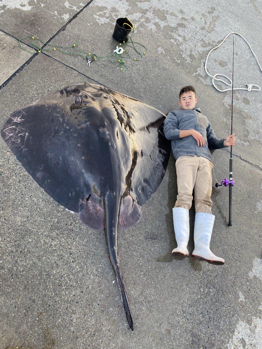 東京の離島からとんでもない怪物出現!全長2m50cm、胎盤幅1m80cm、余裕の150キロオーバー、現世界記録余裕で超えているサイズです。こんなのが岸壁の足元で掛かるから最高すぎる!!!!