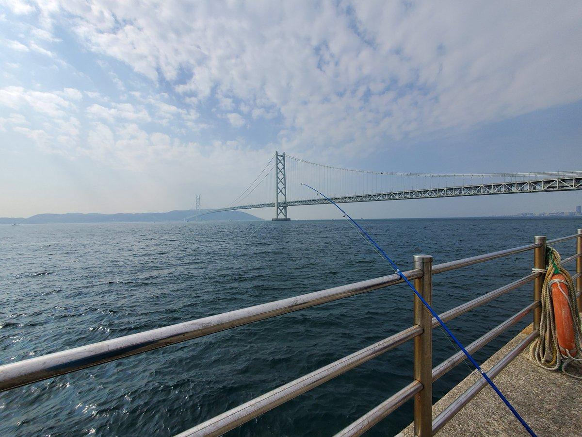 皆様こんにちは今日は海今年の釣り上げ一匹目フグ!調理できないのでリリースしました💦明日は仕事なので短時間勝負✌️#イマソラ#釣り#明石海峡大橋#写真好きな人と繋がりたい #ファインダー越しの私の世界ᅠ