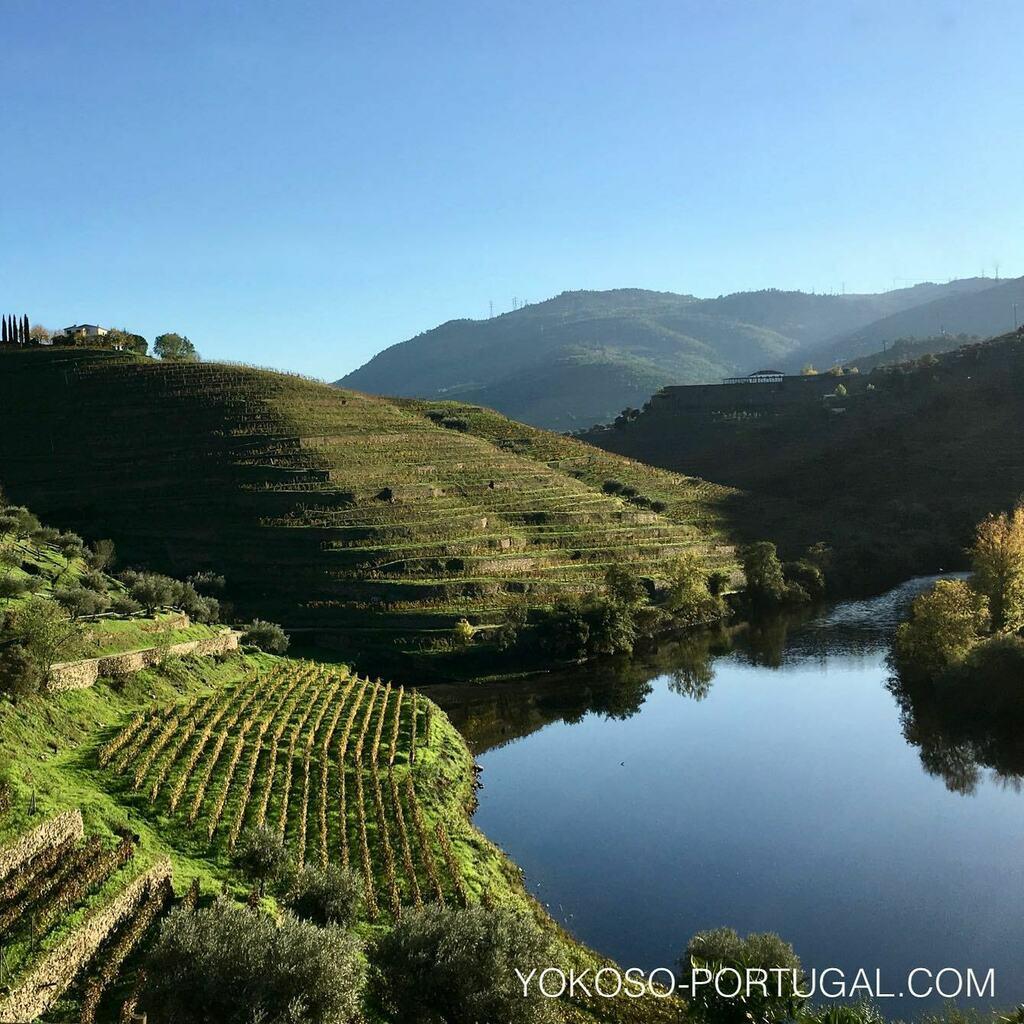 test ツイッターメディア - 世界遺産にも登録されている ドウロ川上流に広がる美しき葡萄の段々畑。 #世界遺産 #ポルトガル https://t.co/RJa3ZyEDAn