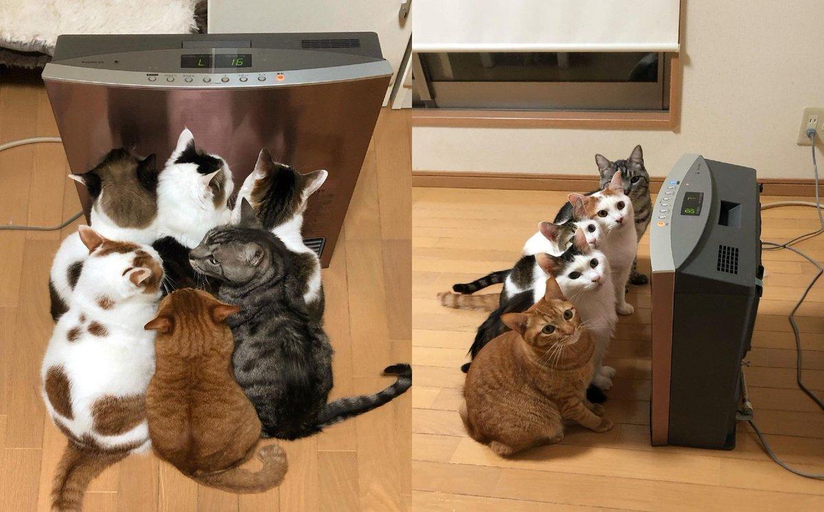 【今週の人気記事】猫6匹がヒーターの前で大渋滞 ぎゅうぎゅうであたたまる猫たちがかわいい