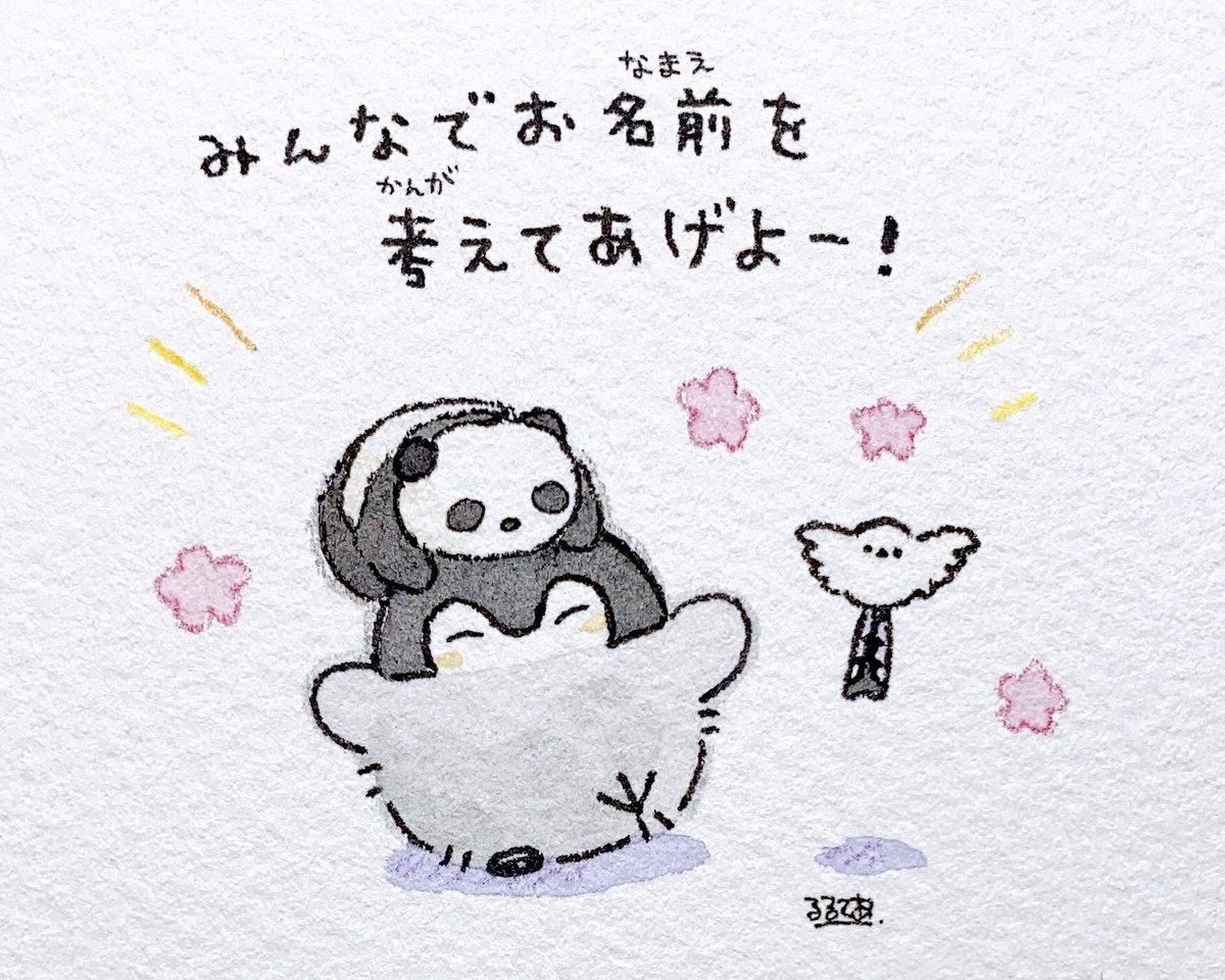 コウペンちゃんがアドベンチャーワールドにて、赤ちゃんパンダに出会ったようです🐼