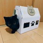 これは可愛い…!!ねこねこ食パンの箱に黒猫さんが入ってる!