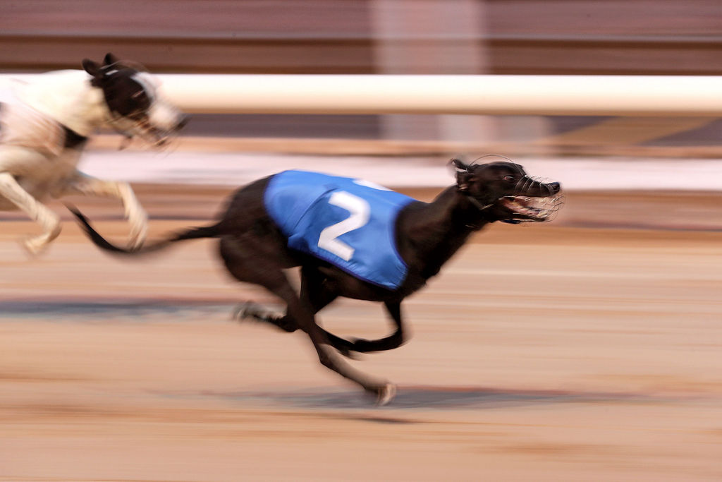 Shelbourne dogs betting online horse racing games betting free