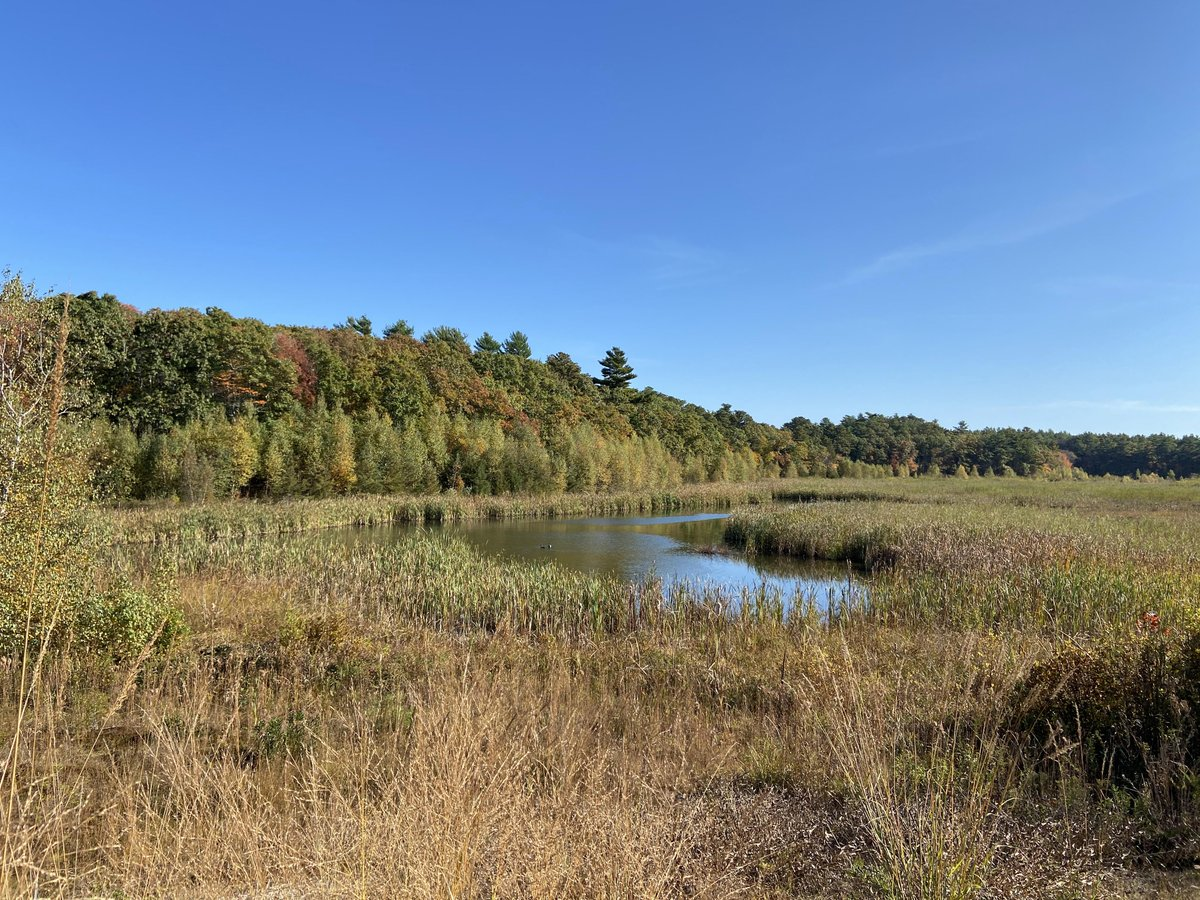 The wait is over! Thanks to the restoration work done cooperatively by many groups, including @MassEcoRestore, @MassAudubon's Tidmarsh Wildlife Sanctuary is fully reopen!https://t.co/uDEd6qP0Iw