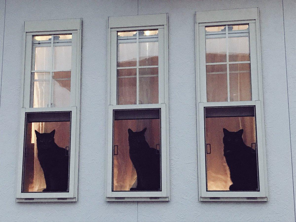 ピアノの先生のとこの ⬛×3 3匹並んで座っているのを見たのはこの時が初めてで2回目はまだ訪れていません…  #お前よくぞそんニャ猫撮ってたな選手権