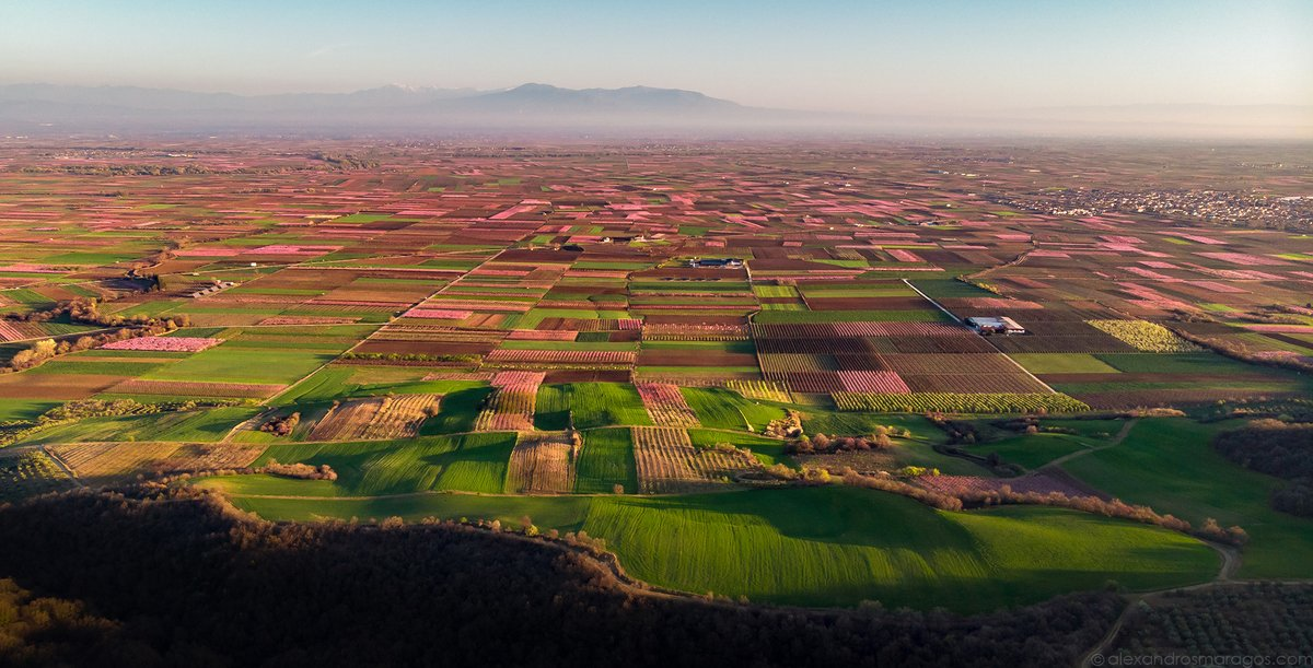 Every year there is a beautiful phenomenon in the Greek countryside. From the beginning to the end of March, the fertile plain of #Veria, #Greece is transformed by thousands of flowering #peach trees into a vast pink sea. Panorama: instagram.com/p/CLlx_h7gJl7/