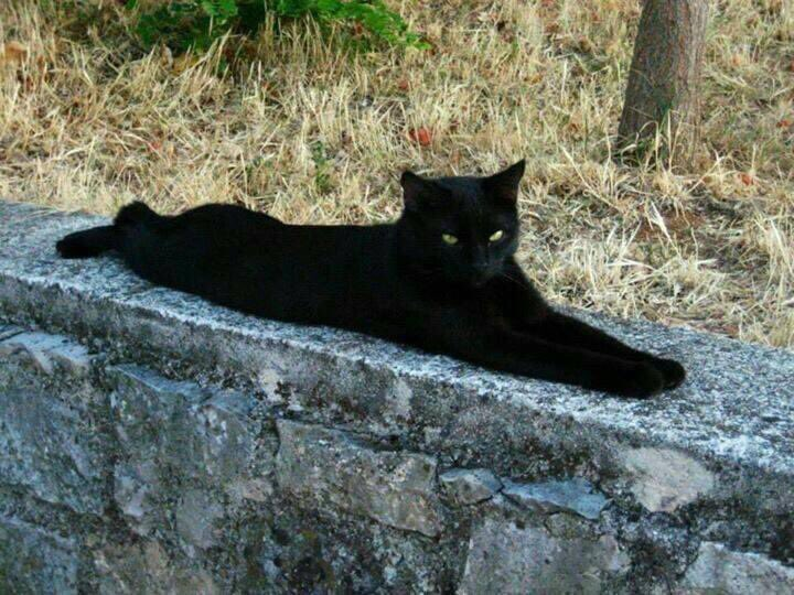 Behold the #MiniHousePanther in the rugged outdoors. King of all he purrveys...  #BlackCatsRule #RescuesRock #AdoptDontShop #PantherSquad